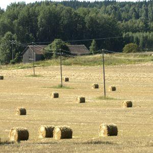 Konventinellt lantbruk