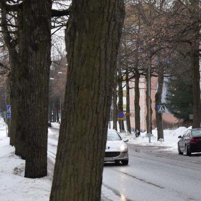 Autoja puiden reunustamalla Puistokadulla.