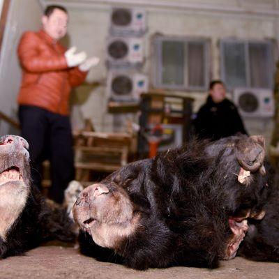 Villieläinkauppaa Kiinassa.