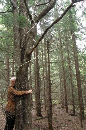Nanna halaa puuta, johon hänen veljensä kuoli. Köysi näkyy vielä kiinni oksassa.
