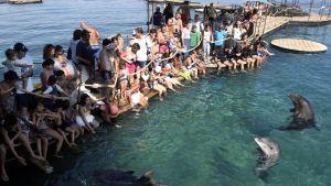 En populär turistattraktion i Eilat är stranden Dolphin Reef där man kan beundra delfiner på nära håll.