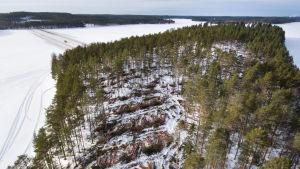 En del av skogen på Huuskonsaari i Lammasjärvi är redan fälld. Över isen löper en väg för skogsmaskiner till ön.