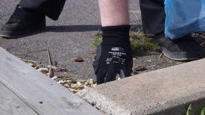 En hand med hanske på plockar upp tobaksfimpar som ligger bredvid en stenkant.