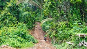 Tutkija Markus Kröger kävelee metsäautotiellä Jamanxim-joen lähellä Brasiliassa.