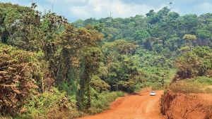 Amazon Ruropolis BR163 sukeltaa sademetsaan