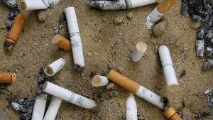 Cigarettfimpar i sanden.