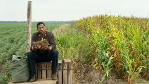 En man sitter på en trälåda vid ett majsfält och läser en bok.
