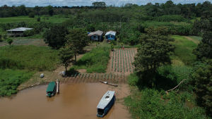odling i Amazonas