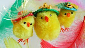 Påskkycklingar (inte riktiga, levande djur).
