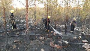 Tre brandmän släcker en skogsbrand.