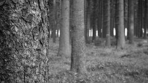 Träd i skog.