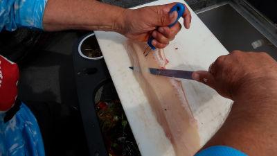 Bild av Mika Vornanen som rensar en gädda och som skär bort den  beniga biten av filén.