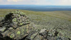 Näkymä Vuomapään huipulta Urho Kekkosen kansallispuistossa.