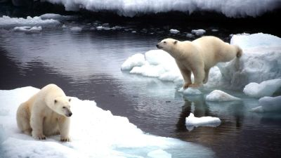 En dod och fyra skadade av isbjorn