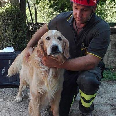 Golden retrievern Romeo räddades i staden Amatrice över en vecka efter den förödande jordbävningen i Italien.