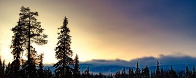 Vinterlandskap i Lappland