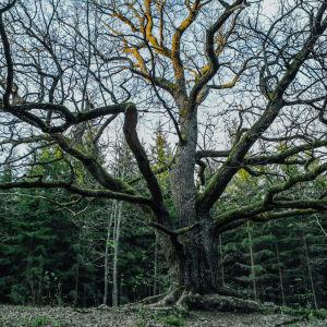 Dolt av skog