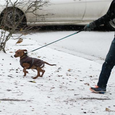 En person promenerar med en hund i Helsingfors i november 2016.