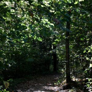 Stig i skogen på Ramsholmen