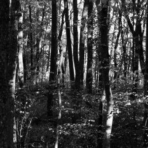 Skogen på Ramsholmen i Ekenäs