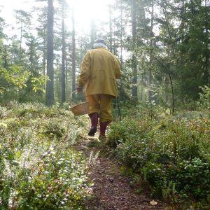 Maj-Helen Köhler i svampskogen.