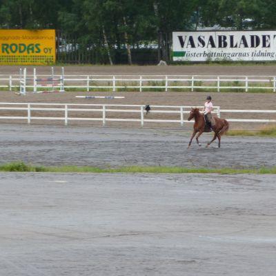 Ryttare tränar sin häst på travbanan i Vasa.