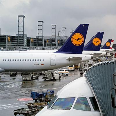 Lufthansan lentokoneita Frankfurtin lentokentällä Saksassa.