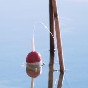 Ett flöte till ett metspö ligger på en vattenyta bredvid några vasstrån.