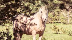 Ystäväi hevonen