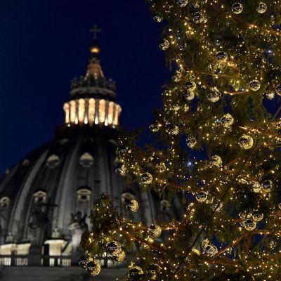 Julgranen på Petersplatsen, i bakgrunden syns Peterskyrkan.