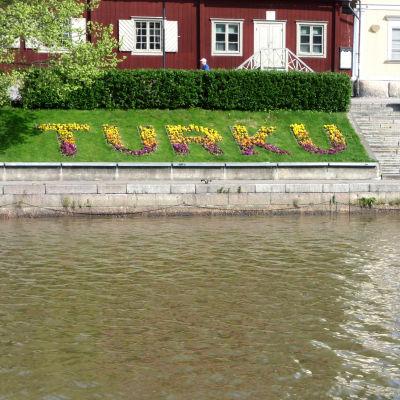 Blomplantering vid åstranden i Åbo med texten Turku Åbo