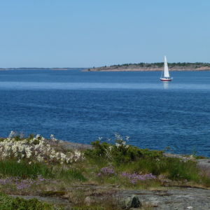 Skärgårdsbild med en segelbåt på havet