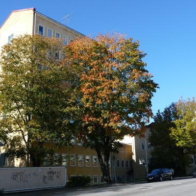 Åbolands sjukhus i höstskrud