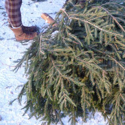 Julgran på marken.