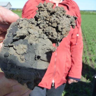 Esa Koskenniemi från NTM-centralen visar en klump med svartblå sulfatjord från Söderfjärden.