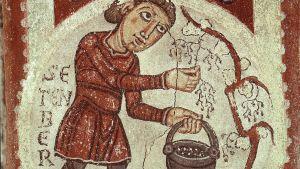 Fresk från 11-talet som föreställer skördande av vin.