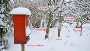 Erilaisia lintujen talviruokintamalleja