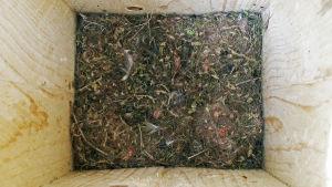 Talgoxens bo i en holk efter att ungarna flugit ut.