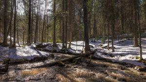 Bäcken fotat en vårvinter. Ett tunt snötäcke på marken men bäcken porlar.