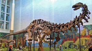 Dinosaurie på museum i London