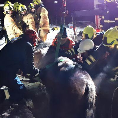Pelastuslaitos auttaa hevosta pois kaivosta Luumäellä.