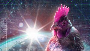 kuvituskuva kana