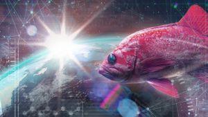 kuvituskuva kalasta