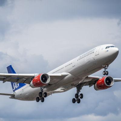 Ett SAS-flygplan som håller på att lyfta.