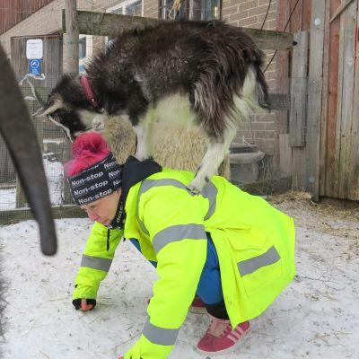 Heidi Ahlfors pyörittää miehensä kanssa tuotantoeläinten turvakotia Karjalohjalla. Kuvassa Ahlforsin lisäksi Huurre-vuohi ja Kipinä-lammas.