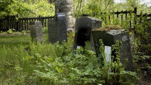 Hoitamattomia hautoja Jyväskylän vanhalla hautausmaalla.