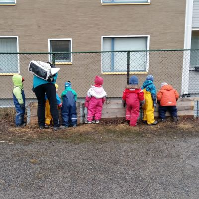 dagisbarn tittar ivrigt ner i de odlingslådor Åbo stad placerat ut för att se om där växer något.