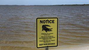 Varningsskylt för alligatorer vid åskådarläktaren på Cape Canaveral