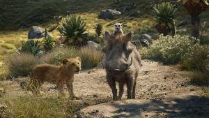 På bilden syns lejonet Simba, surikaten Timon och vårtsvinet Pumba
