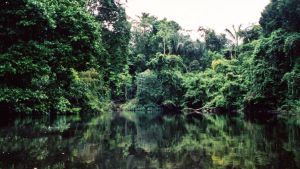 Viidakkoa Amazon-joella